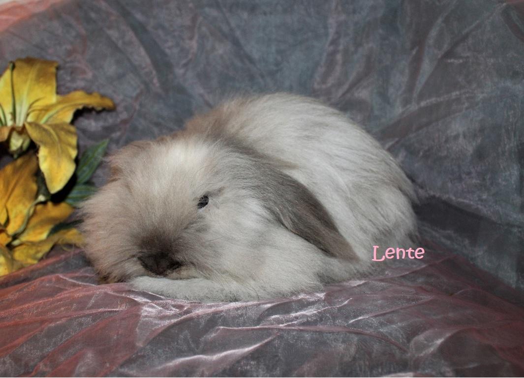 teddy widder Lente