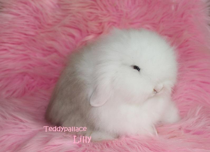 teddy widder Lilly